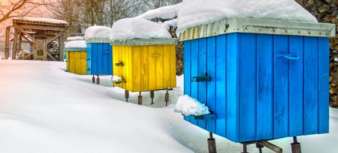 Сколько меда правильно оставлять пчелам на зиму