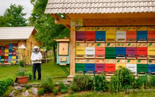 Виды, особенности и изготовление павильона для пчел