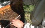Весенние работы по месяцам на пасеке и развитие пчел