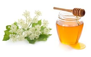 Дягилевый мед и его особенности применения