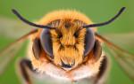 Топ 65 интересных фактов о пчелах