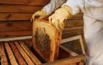 Календарь пчеловода по месяцам