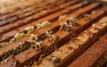 Сборока и формирование гнезд пчел на зиму