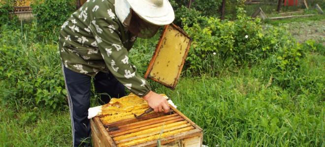 Как и когда правильно осуществлять сбор меда