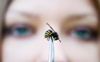 Зачем же нужны осы и последствия их вымирания