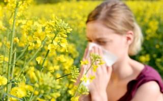 Всё про аллергию на пыльцу