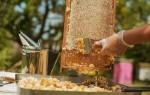 Применение и полезные свойства пчелиного Забруса